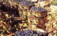 Wine Routes of Cyprus